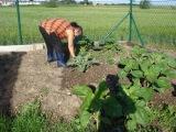 zahradnicke_prace(1).JPG